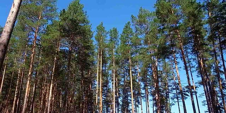 ロシアの豊かな森