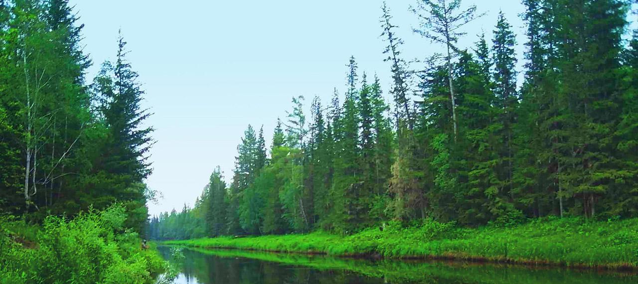 ロシアの森から