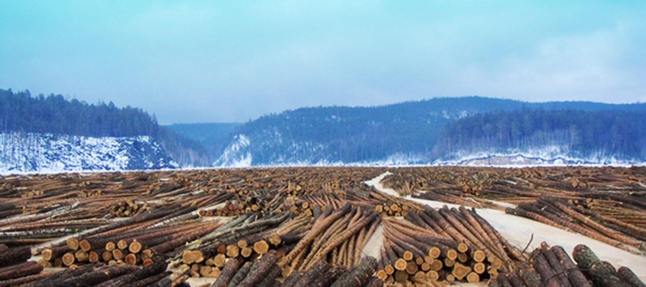 ロシアの流木材